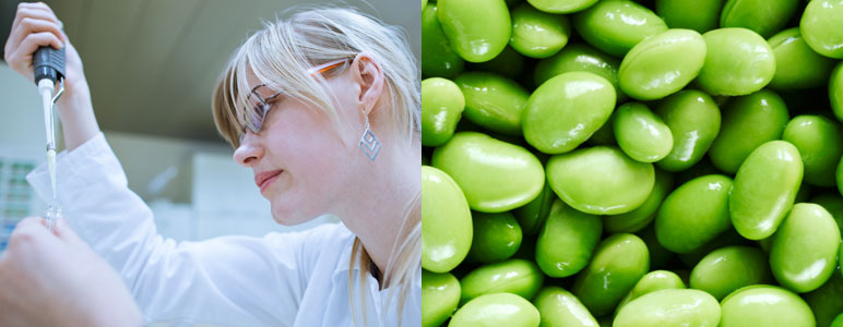 Scientist and soybeans